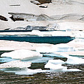 Icebergs In August Glacier International Peace Park by Ed  Riche