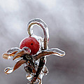 Iced Rose Hips by Terri Winkler