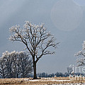 Iced Tree by David Arment