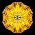 Iceland Poppy Flower Mandala by David J Bookbinder