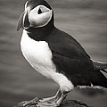 Iceland Puffin by For Ninety One Days
