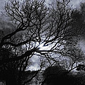 Ichabod's Pathway by Donna Blackhall