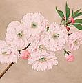 Ichi-yo - Single Leaf - Vintage Japan Watercolor by Just Eclectic