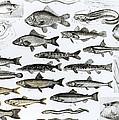 Ichthyology by English School
