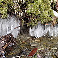 Icicles In The Stream by Robert Nickologianis