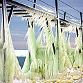 Icicles On The Catwalk by Jackie Novak