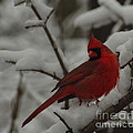 Iconic Avian by Kitrina Arbuckle