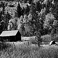 Iconic Cabin  Black And White by Michael Courtney