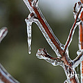 Icy Branch-7463 by Gary Gingrich Galleries
