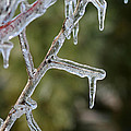 Icy Branch-7506 by Gary Gingrich Galleries