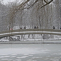 Icy Central Park by Catie Canetti