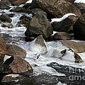 Icy Rapids by Susan Herber
