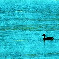 Icy Swim by Annie Adkins