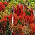 Idaho Autumn by Greg Norrell