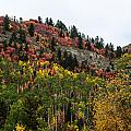 Idaho Colors In Fall by Yeates Photography