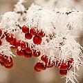 Idaho Frost by Paul Bartoszek