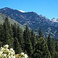 Idaho Mountain Side by Susan Kinney