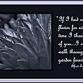 If I Had A Flower by Barbara St Jean