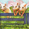 If Pigs Could Fly by Jane Schnetlage