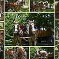 If You Love Belgian Horses by Kathy Barney