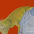 Iguana By The Tail by Ann Horn