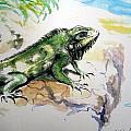 Iguana On Beach by David Francke
