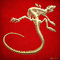 Iguana Skeleton In Gold On Red  by Serge Averbukh