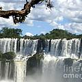 Iguazu Falls by Helena Wierzbicki