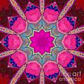 Illuminated Rose by SiriSat Julia Claire