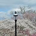 Illuminating Blossoms by Sonali Gangane