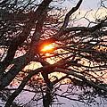 Illuminating Sunset by Robin Vargo