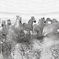 Illusion Of Power (13 Horse Power Though) by Roman Golubenko