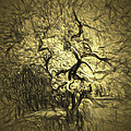 Illusion Tree by Jean OKeeffe Macro Abundance Art