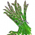 Illustration Of Asparagus by Nan Wright