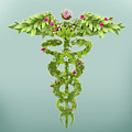 Illustration Of Caduceus Symbol by Fanatic Studio / Science Photo Library