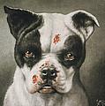 I'm A Bad Dog What Kind Of A Dog Are You Circa 1895 by Aged Pixel