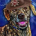 I'm A Canine Community Reporter by Kathy Tarochione