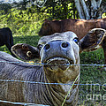 I'm All Ears by Kaye Menner
