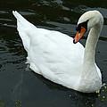 Im Not A Ugly Duck by Scott B Bennett
