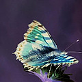 Imaginary Butterfly by Patrick Kessler