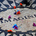 Imagine by Tracey Pearson Boyajian