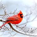 Img 2259-22 - Northern Cardinal by Travis Truelove
