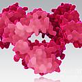 Immunoglobulin E, Antibody by Evan Oto