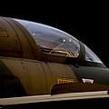 Impala II by Paul Job