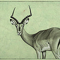 Impala by James W Johnson