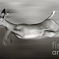 Impala running  by Johan Swanepoel
