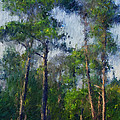 Impression Trees by William Sargent