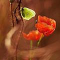 Impression With Red Poppies by Jaroslaw Blaminsky