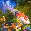 Impressionism  Koi 2 by Amy Vangsgard