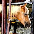 Impressionist Horse by Doc Braham